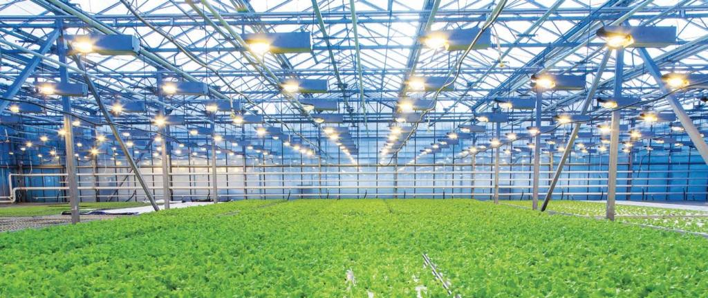Hydrokulturanlage und Vertical Farming